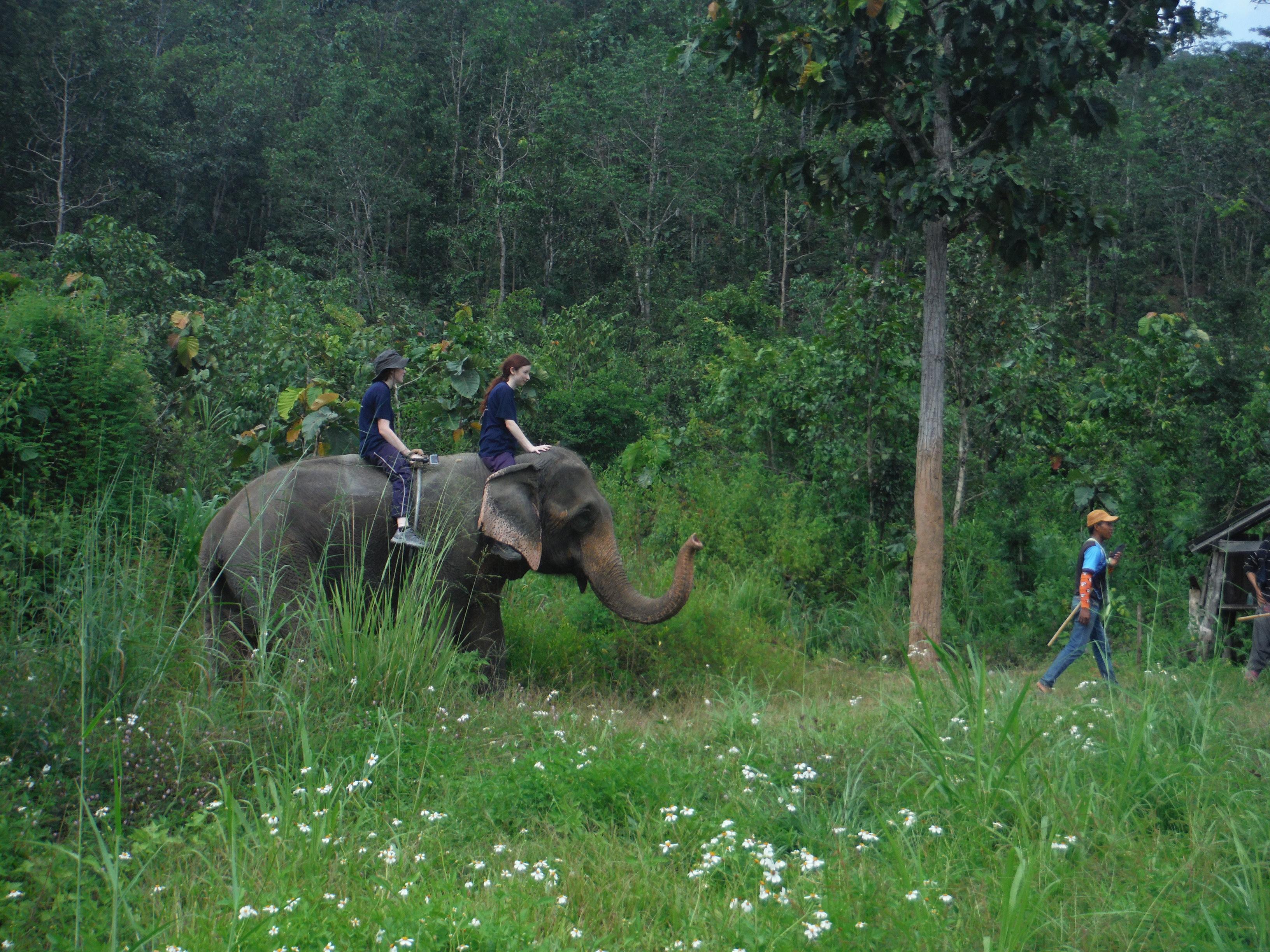 Notre groupe de cornacs du jour - Eddy Elephant (Thaïlande)