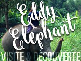 Une journée éléphant éthique