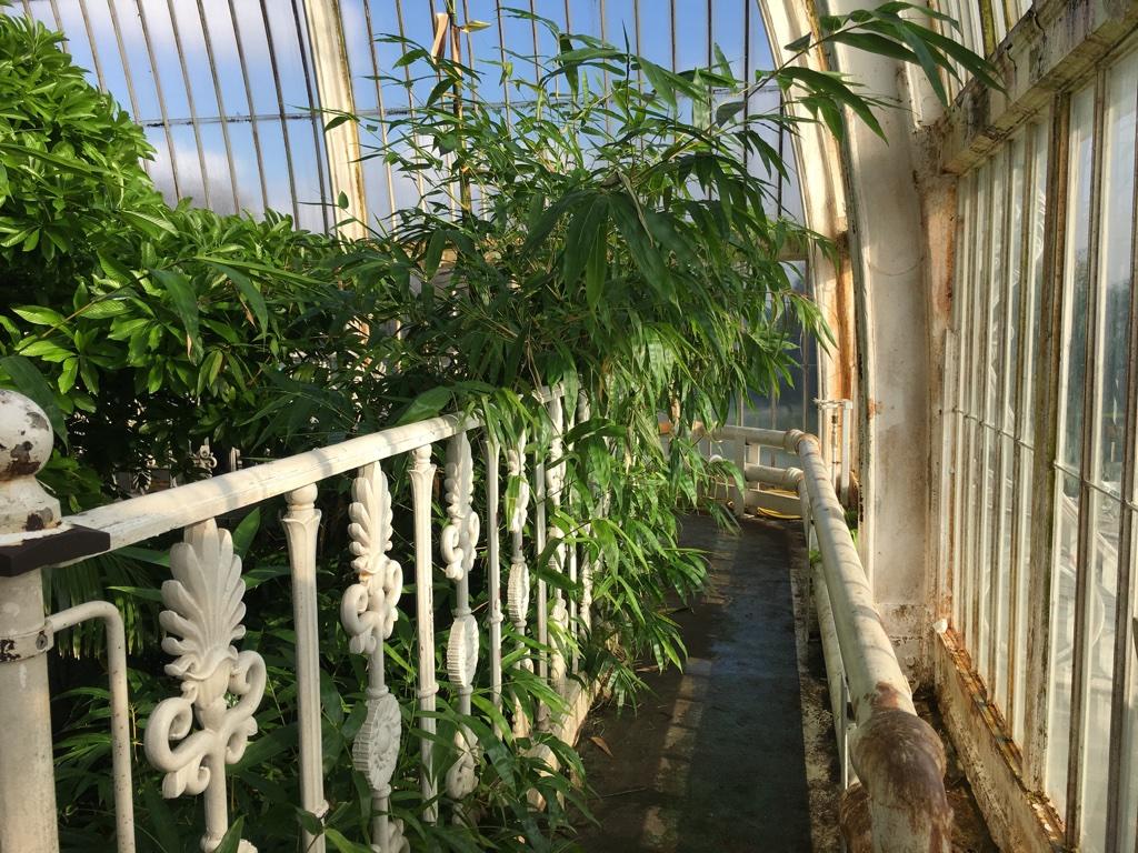 chemin supérieur de la Palm House