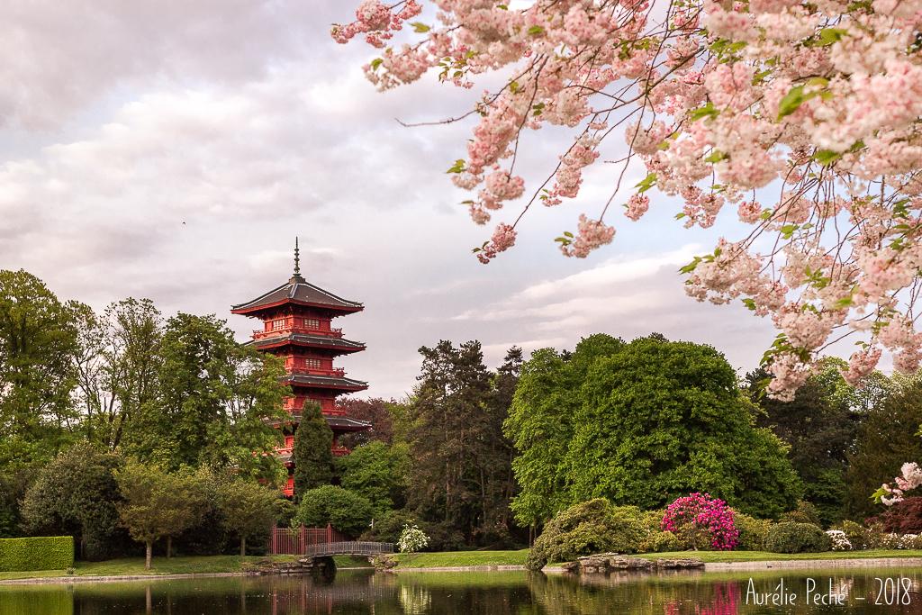 Domaine royal de Laeken, vue sur la tour japonaise