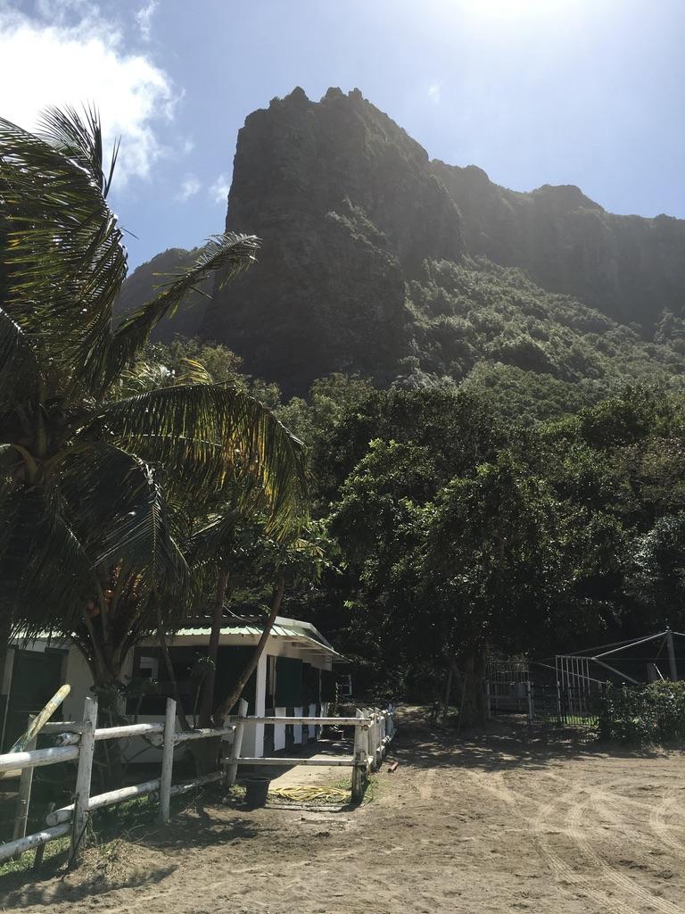 Faire une balade à Cheval sur l'Île Maurice