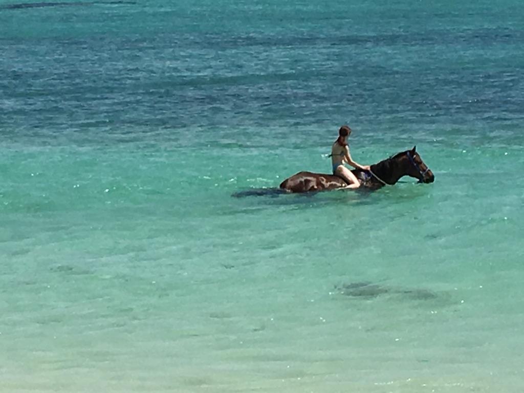 Balade à cheval à Maurice - Sebaigner avec les chevaux dans le lagon