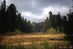 sequoia - crescent meadow