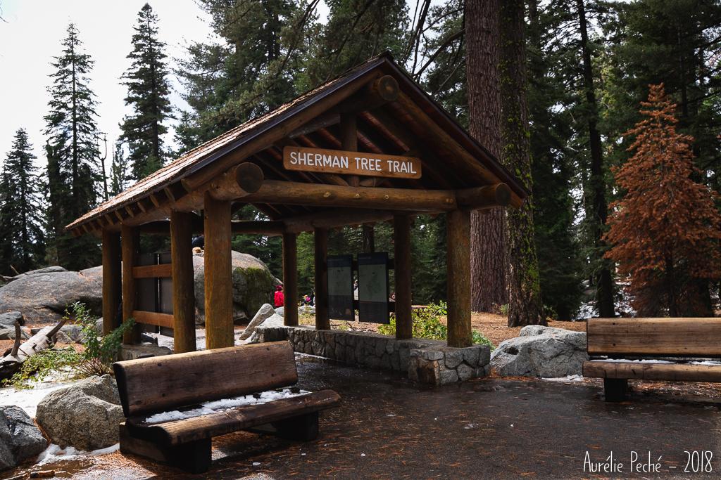 Sequoia - Trail du Général Sherman