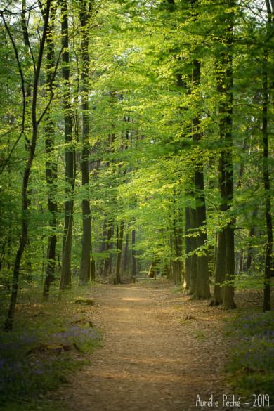 Même sans fleurs, se promener dans un bois au printemps est un plaisir