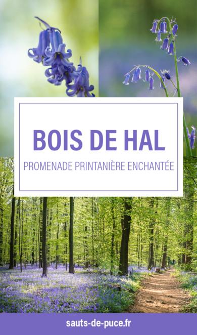 Aller observer la floraison des jacinthes au bois de Hal. Une expérience magique en belgique !