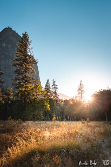 Prairie dans Yosemite