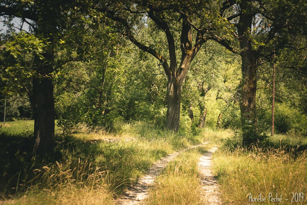 Chemins de la Drôme