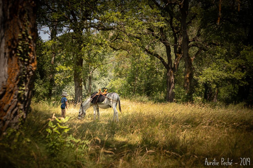 Randonnée avec un âne en Drôme