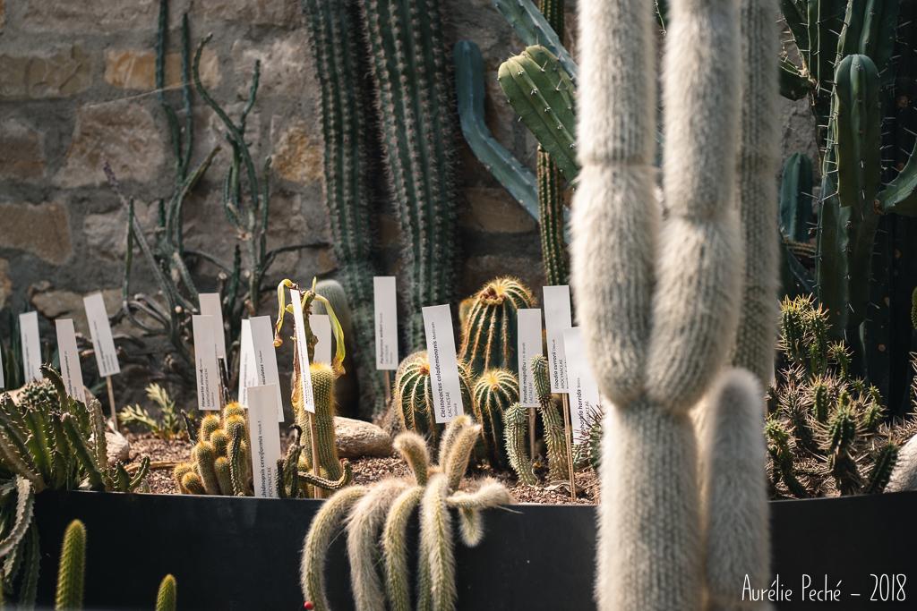 Jardin Botanique de Bergame
