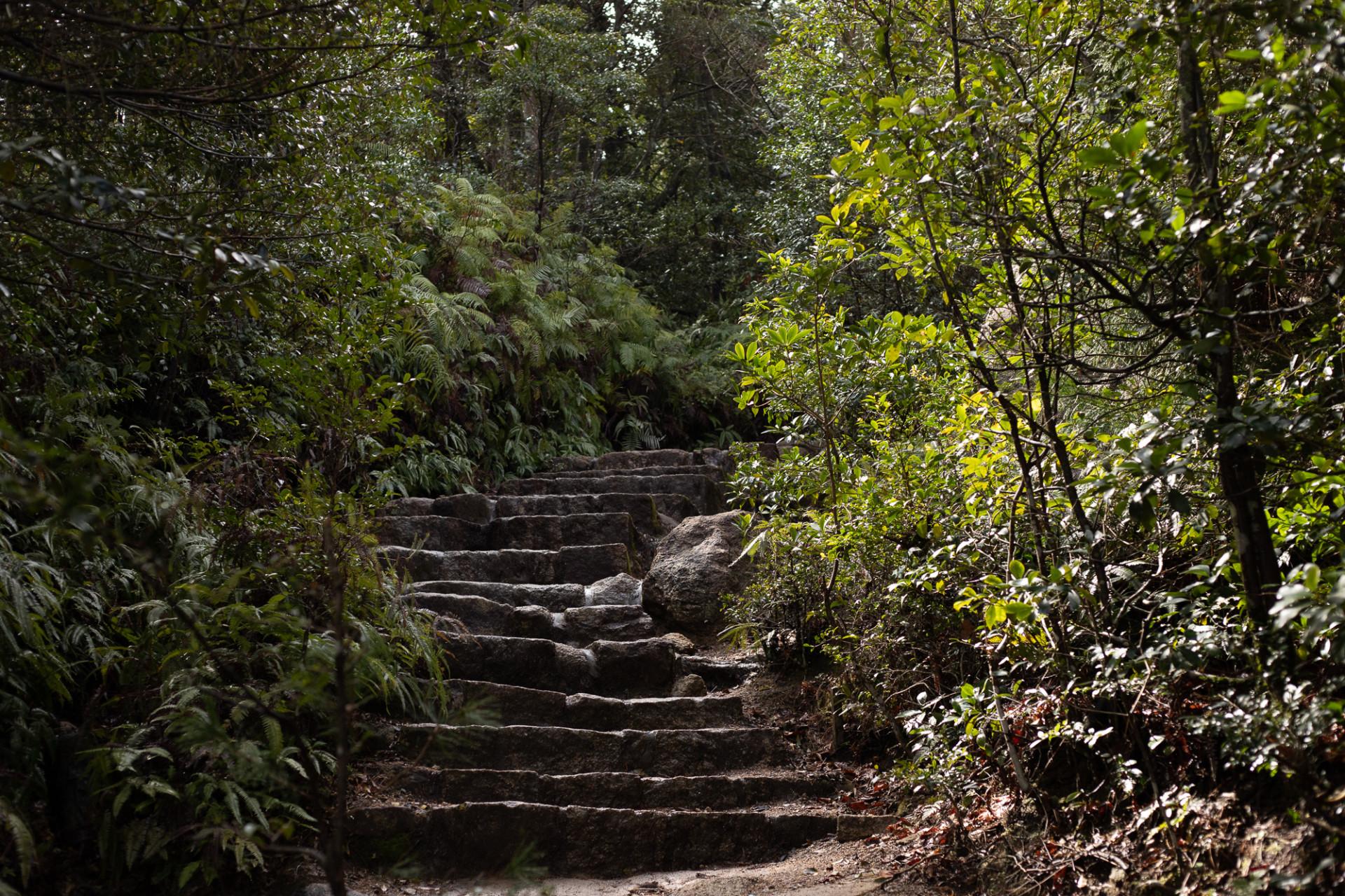 Dans la forêt de Miyajima