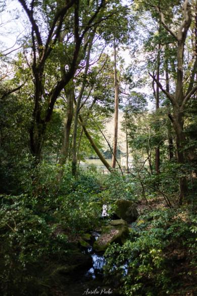 Foret du sanctuaire Meiji
