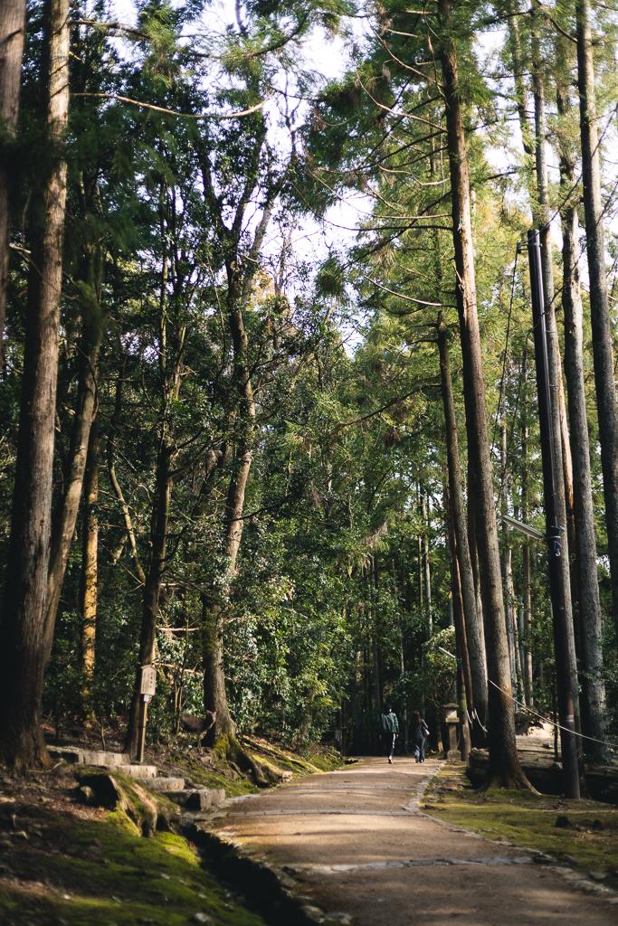 Promenade près du Kasuga Taisha